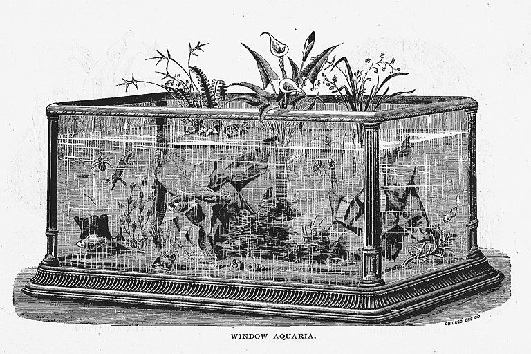 アクアリウム(1876年フィラデルフィア万博)(標準画像) | 博覧会―近代 ...